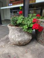 Ocean Rock -Giant Tall Lotus /Planter